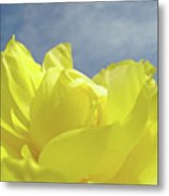Floral Yellow Iris Flowers Blue Sky Baslee Troutman Metal Print