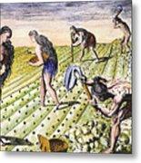 Florida Natives, 1591 Metal Print