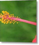 Flower 5 Metal Print