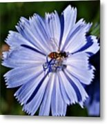 Flower And Bee 2 Metal Print
