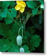 Flower And Fruit Metal Print