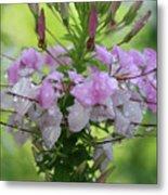 Flower Dew Beauty Metal Print