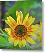 Flower Of The Sun Metal Print