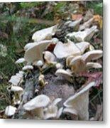 Flowering Fungi Metal Print
