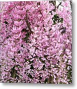 Flowering Willow Metal Print