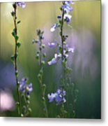 Flowers By The Pond Metal Print