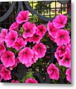 Flowers On Iron Grate In Venice Metal Print