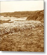 Flowers On The Bluff Metal Print