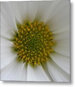 Core Of A Daisy Metal Print