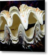 Fluted Giant Clam Shell Metal Print