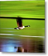 Fly-by Metal Print