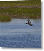 Flying Ibis Metal Print