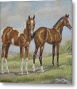 Foals In Pasture Metal Print
