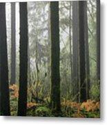 Forest Edge Metal Print