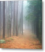 Forest Trail Through Pines Metal Print