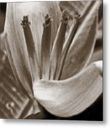 Form Color Texture Pattern Plants 2 Metal Print