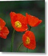 Four Poppies Metal Print