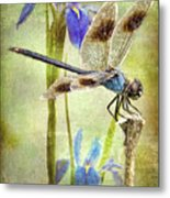Four Spotted Pennant And Louisiana Irises Metal Print by Bonnie Barry