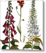 Foxglove And Hawkweed Metal Print
