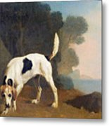 Foxhound On The Scent Metal Print