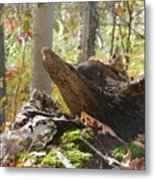 Foxy Stump Metal Print