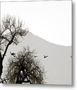 Free Flying Metal Print