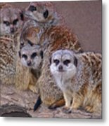 Freezing Meer Cats Metal Print