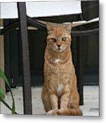 Friendly Cat In Key Largo Metal Print