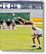Frisbee Dog Metal Print by Brian Wallace