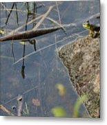Frog At Pond Metal Print