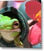 Frog At Selby Metal Print