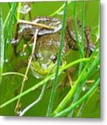 Frog Playing Hide N Seek Metal Print