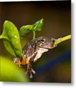 Frogs Life Metal Print