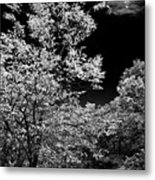 From The Kitchen Window Metal Print
