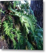 Frosted Ferns Metal Print