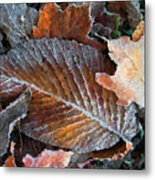 Frosted Painted Leaves Metal Print