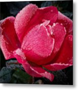 Frosted Rose Metal Print