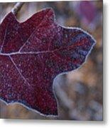 Frosty Maroon Leaf Metal Print