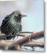 Frozen Feathers Metal Print