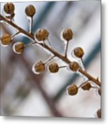 Frozen Seed Capsules In Time Metal Print