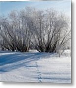 Frozen Views 4 Metal Print
