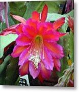 Fuchia Cactus Flower Metal Print
