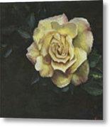 Garden Rose Metal Print by Jeff Brimley