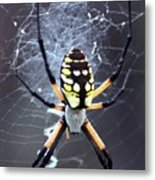 Garden Spider Metal Print