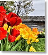 Garden Tulips On A Cloudy Day Metal Print