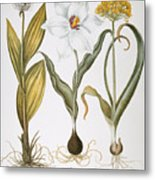 Garlic, 1613 Metal Print