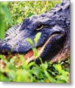 Gator 1 Metal Print