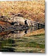 Gator 5 Metal Print
