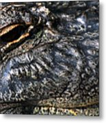 Gator Eye Metal Print
