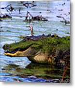 Gator Growl Metal Print